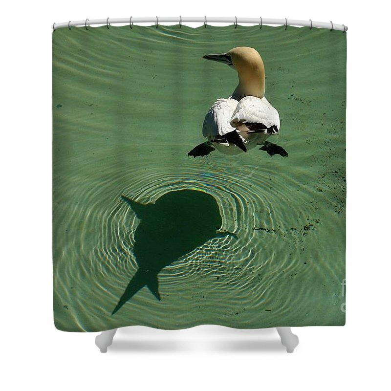 Amsterdam Shower Curtain featuring the photograph Shark Attack by Brothers Beerens