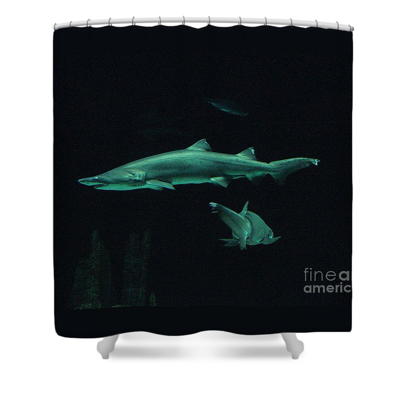 Shark Shower Curtain featuring the photograph Sharks-09433 by Gary Gingrich Galleries