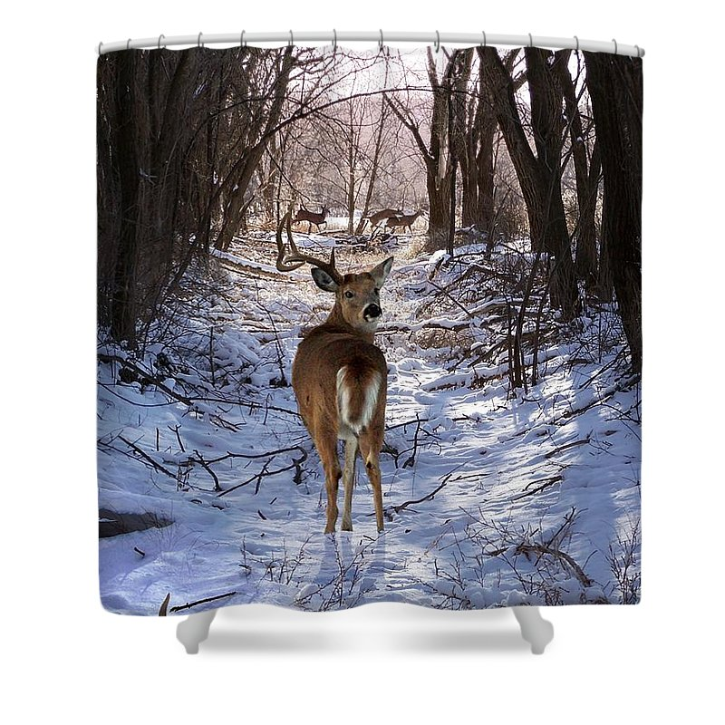 Deer Shower Curtain featuring the mixed media Shedding Time by Bill Stephens