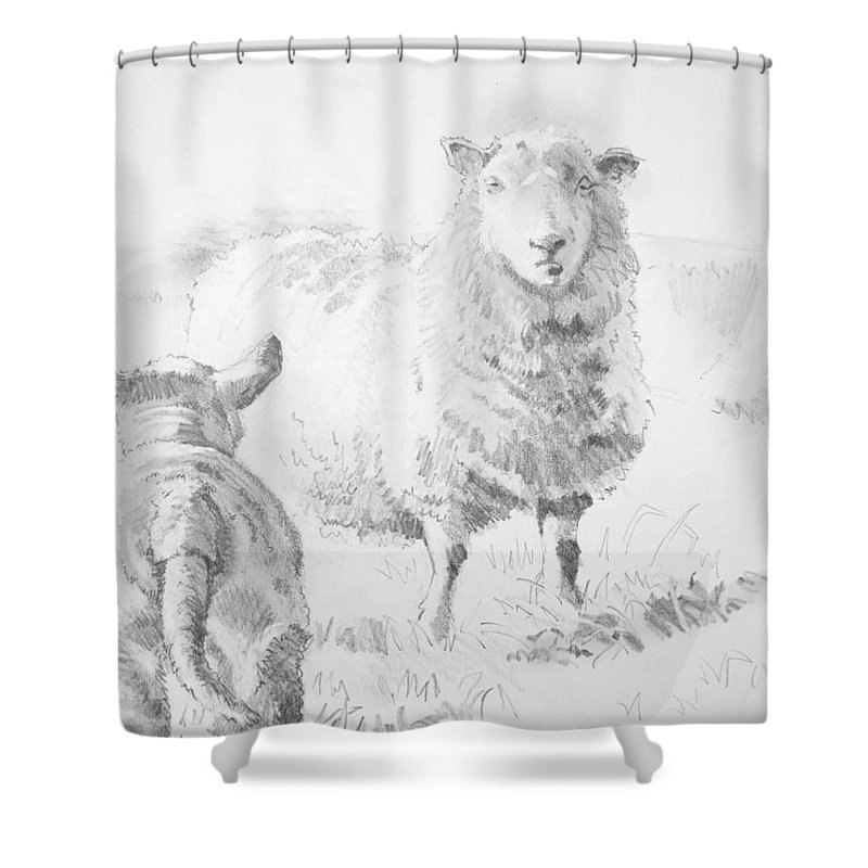 Sheep And Lamb Drawing Shower Curtain For Sale By Mike Jory