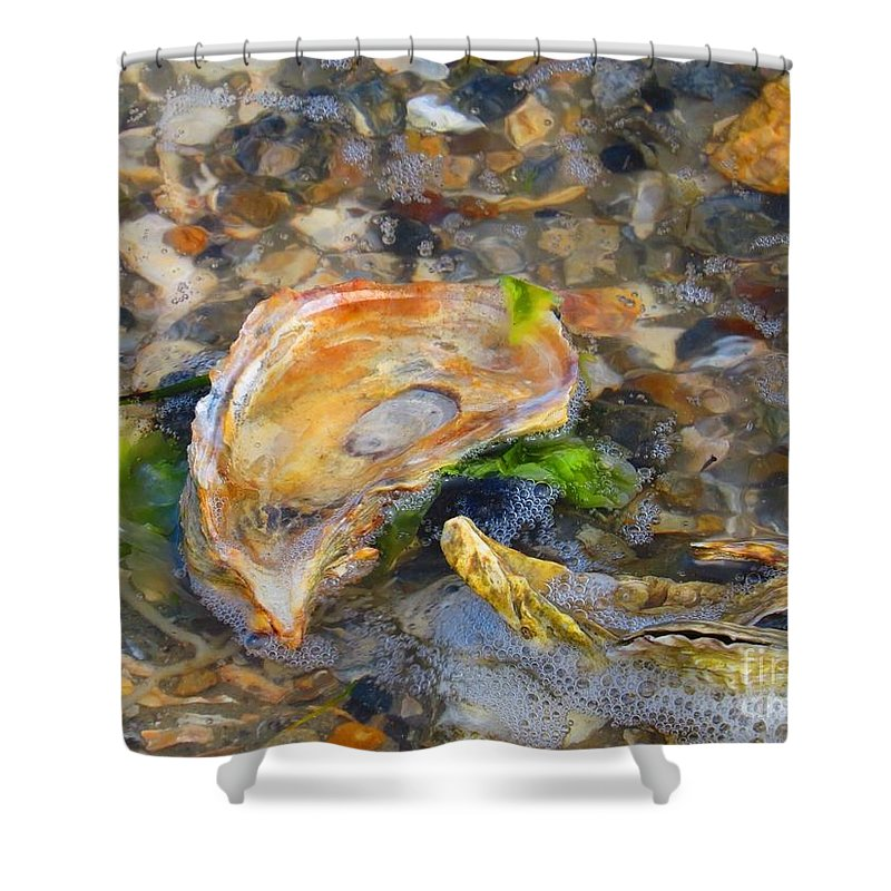 Shell Shower Curtain featuring the photograph Shell abstract by Rrrose Pix