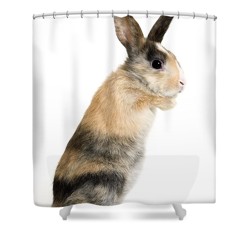 Short Haired Rabbit Shower Curtain For Sale By Jean Michel Labat