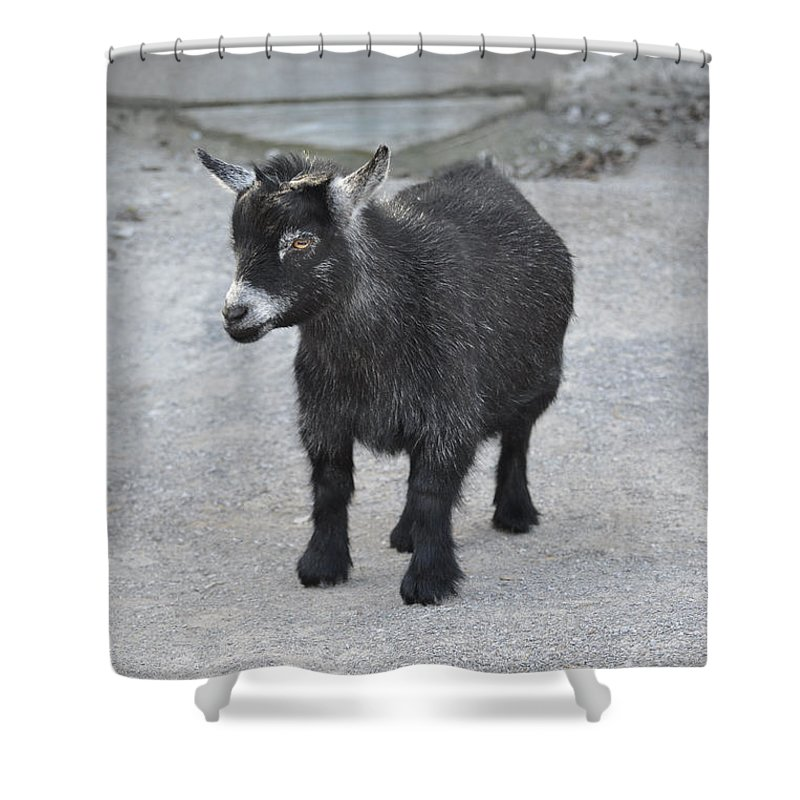 Animals Shower Curtain featuring the photograph Shorty by Jan Amiss Photography