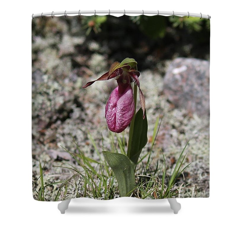 Lady Slipper Shower Curtain featuring the photograph Showy Lady's Slipper 1 by Ruth Kamenev