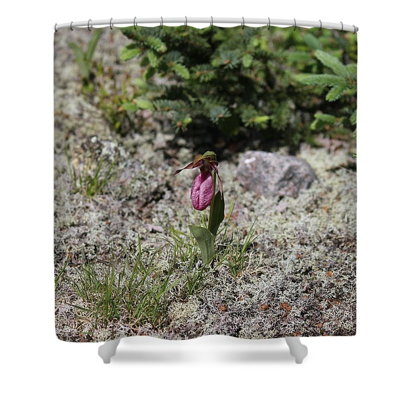 Pink Flower Shower Curtain featuring the photograph Showy Lady's Slipper 3 by Ruth Kamenev