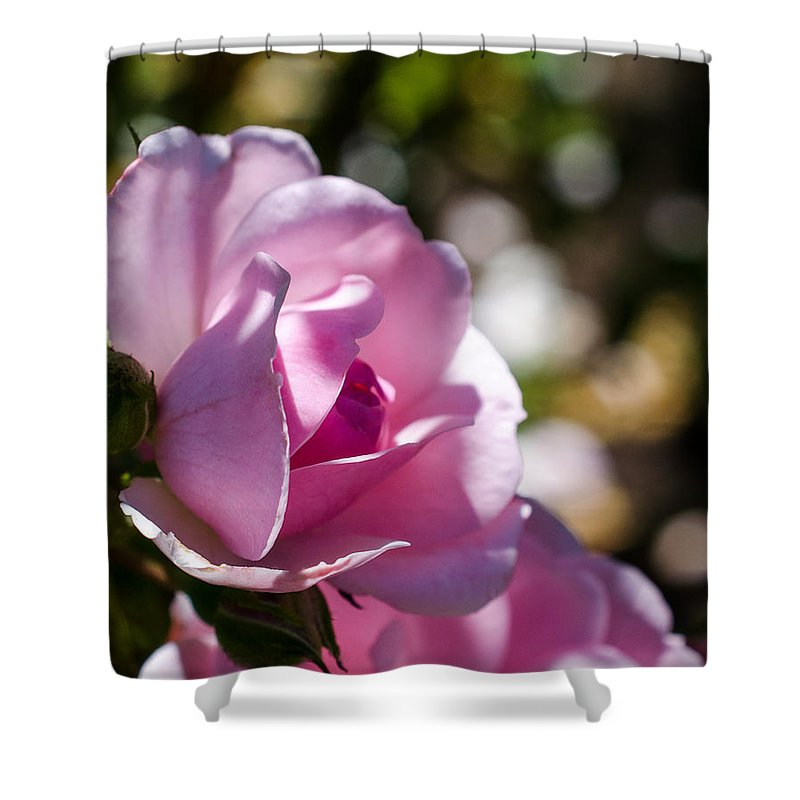 Soft Shower Curtain featuring the photograph Shy Pink Rose Bud by Jordan Blackstone