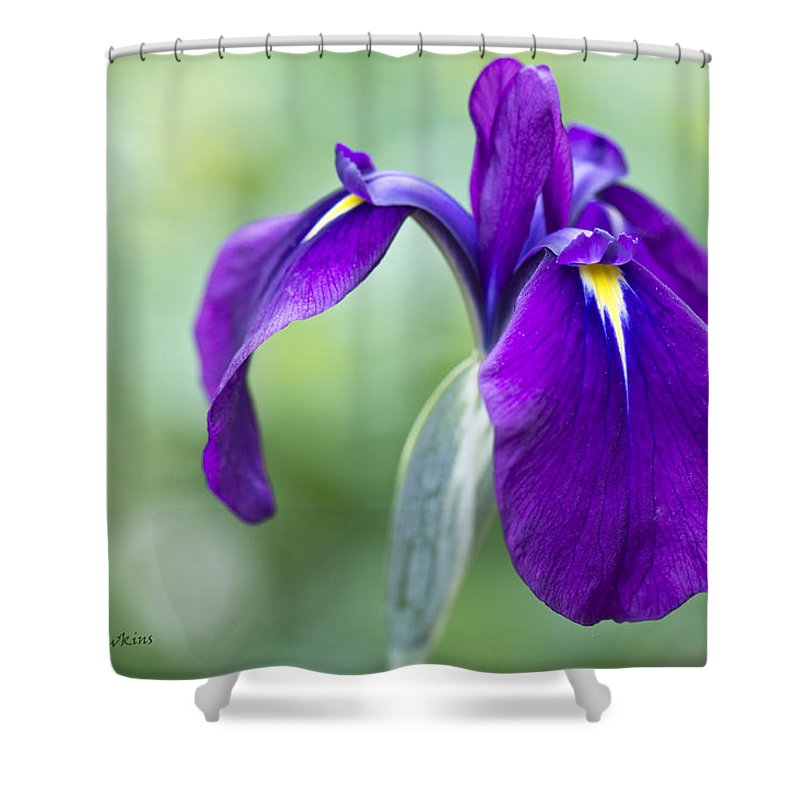 Iris Flower Purple Blue Green Nature Outdoors Shower Curtain featuring the photograph Siberian by Diane Hawkins