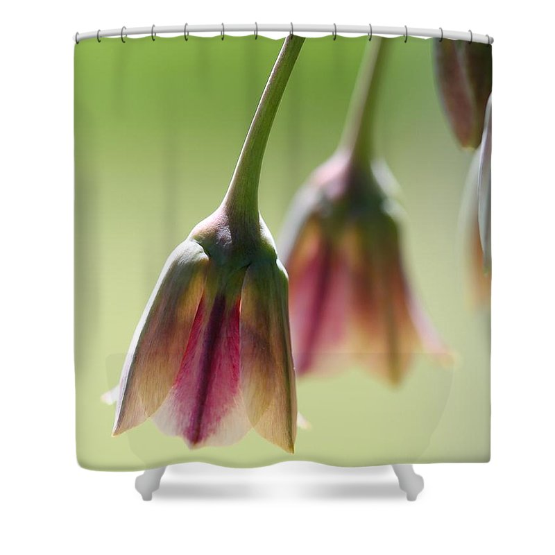 Sicilian Honey Garlic Shower Curtain featuring the photograph Sicilian Honey Garlic by J McCombie