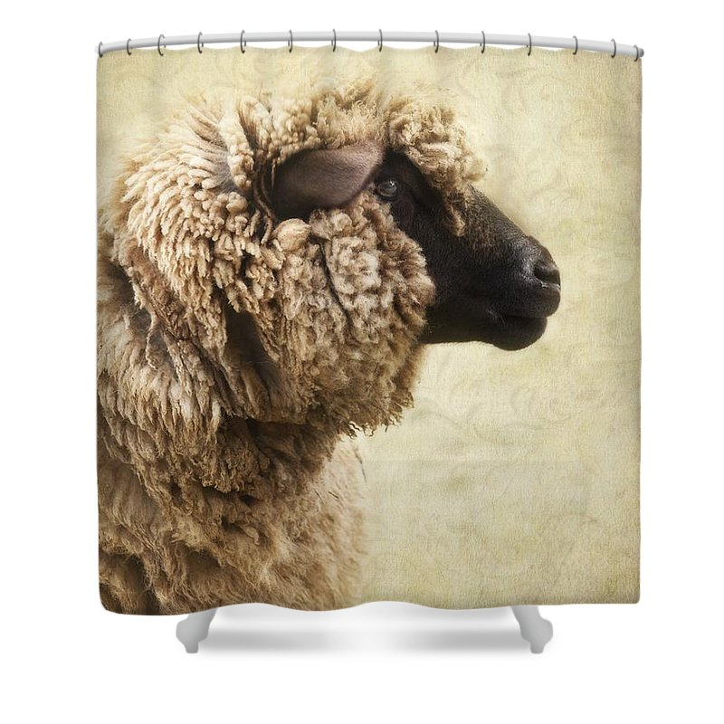 Sheep Shower Curtain Featuring The Photograph Side Face Of A By Priska Wettstein