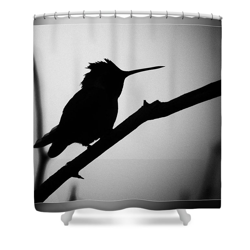 Fine Art Photographers Shower Curtain featuring the photograph Silhouette Humming Bird by Blake Richards
