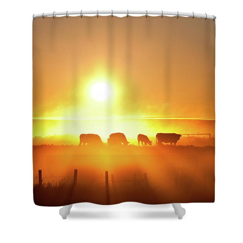 Scenics Shower Curtain featuring the photograph Silhouette Of Cattle Walking Across The by Imaginegolf