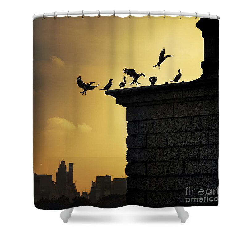 Central Park Shower Curtain featuring the photograph Silhouettes Of The Cormorants by Istvan Kadar