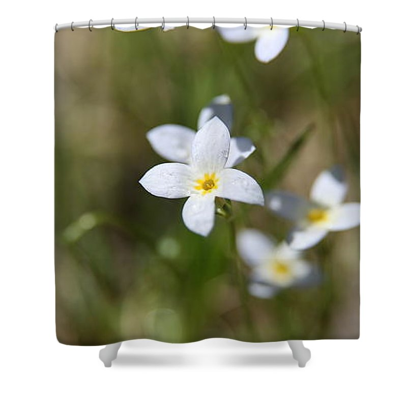 Delicate Connecticut Wildflower Shower Curtain featuring the photograph Simplify by Neal Eslinger
