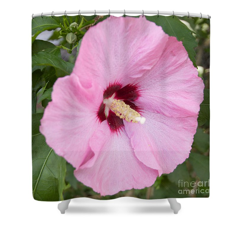 Flower Shower Curtain featuring the photograph Single Pink by William Norton