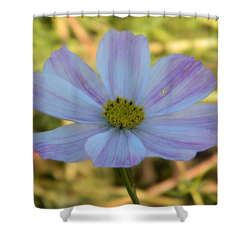 Cosmos Shower Curtain featuring the photograph Singular Cosmos by Nicki Bennett