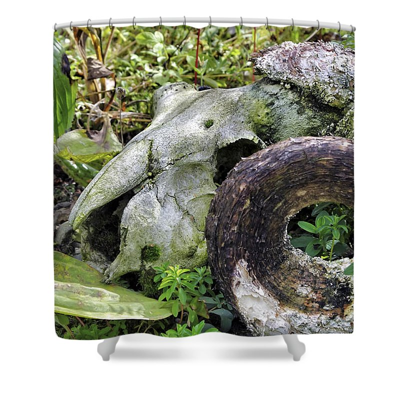 Skull Shower Curtain featuring the photograph Skull At Cluny Gardens by Jason Politte