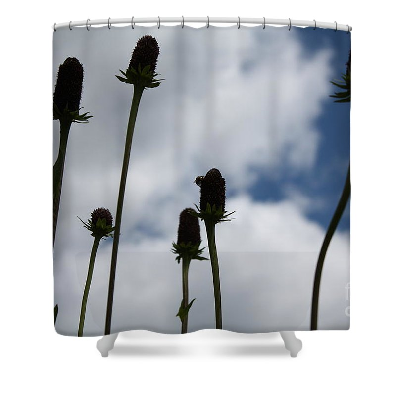 Sky Shower Curtain featuring the photograph Sky Flowers by Brandi Maher