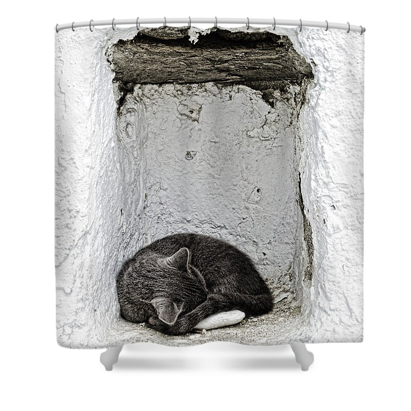 Cat Shower Curtain featuring the photograph Sleeping Cat by Paul and Helen Woodford
