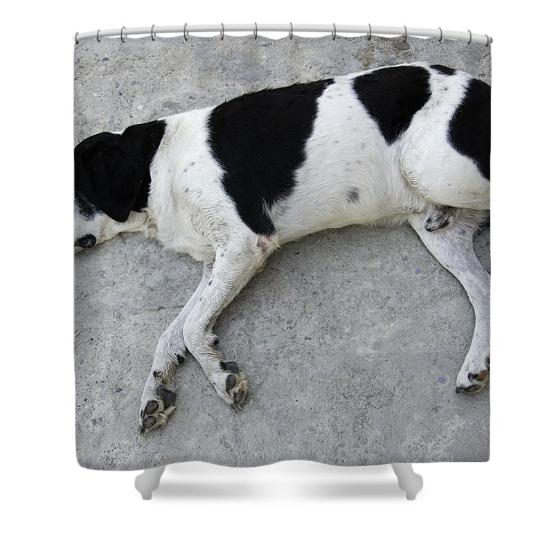 Dog Shower Curtain featuring the photograph Sleeping Dog Lying On The Ground by Matthias Hauser