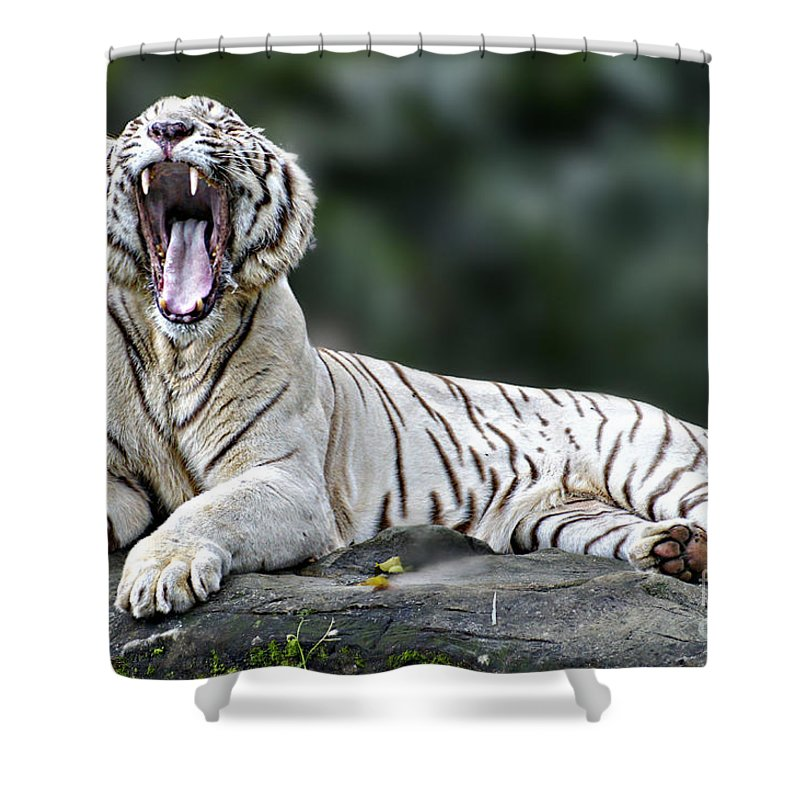 Animals Shower Curtain featuring the photograph Sleepy by Ben Yassa
