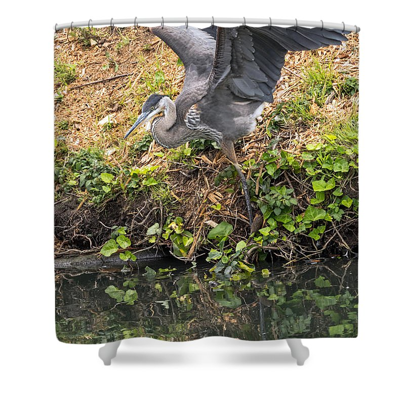 Bird Shower Curtain featuring the photograph Slip Sliding by Kate Brown