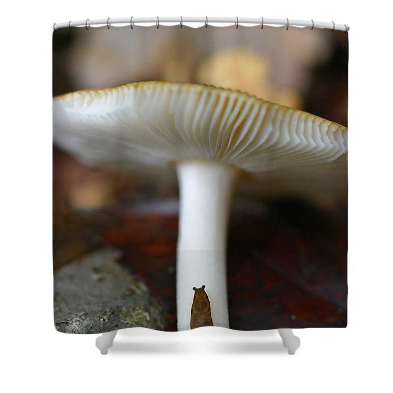 Mushroom Shower Curtain featuring the photograph Slugs And Mushrooms by David Rucker