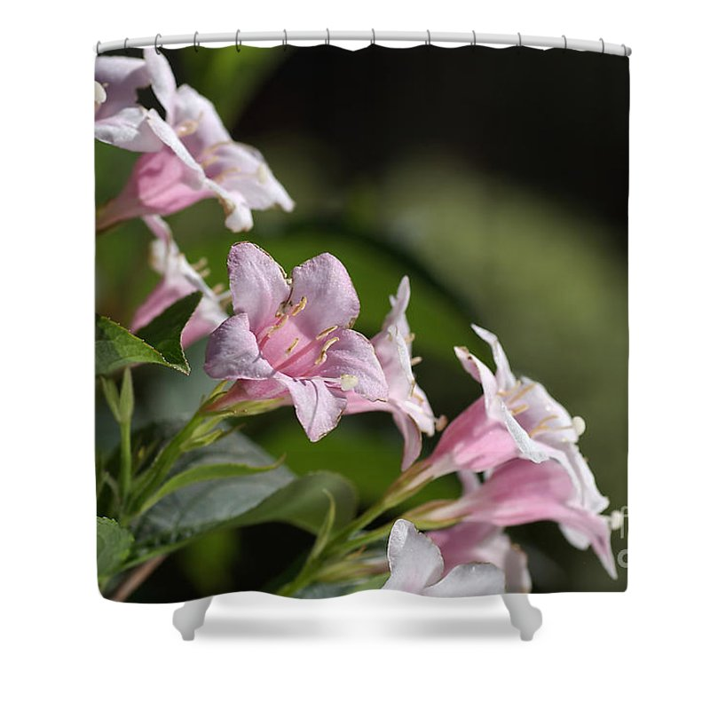 Small Shower Curtain featuring the photograph Small Flowers by Joy Watson