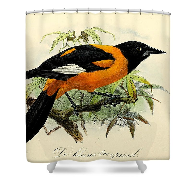 Oriole Shower Curtains