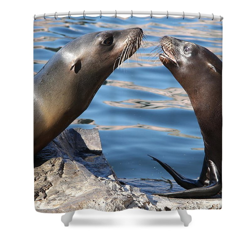 Seals Shower Curtain featuring the photograph Small Talk by Christiane Schulze Art And Photography