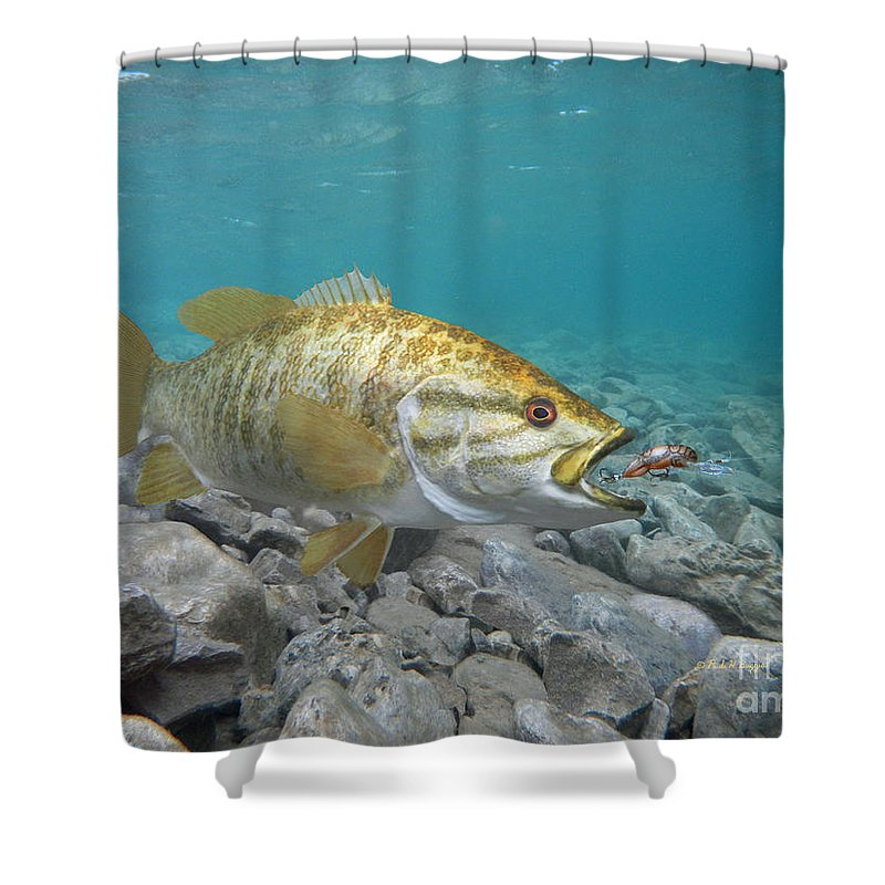Smallmouth Bass And Rebel Lure Shower Curtain For Sale By Paul Buggia