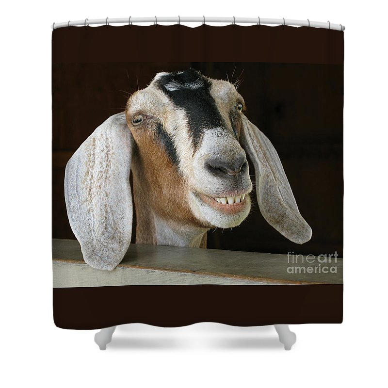 Goat Shower Curtain featuring the photograph Smile Pretty by Ann Horn