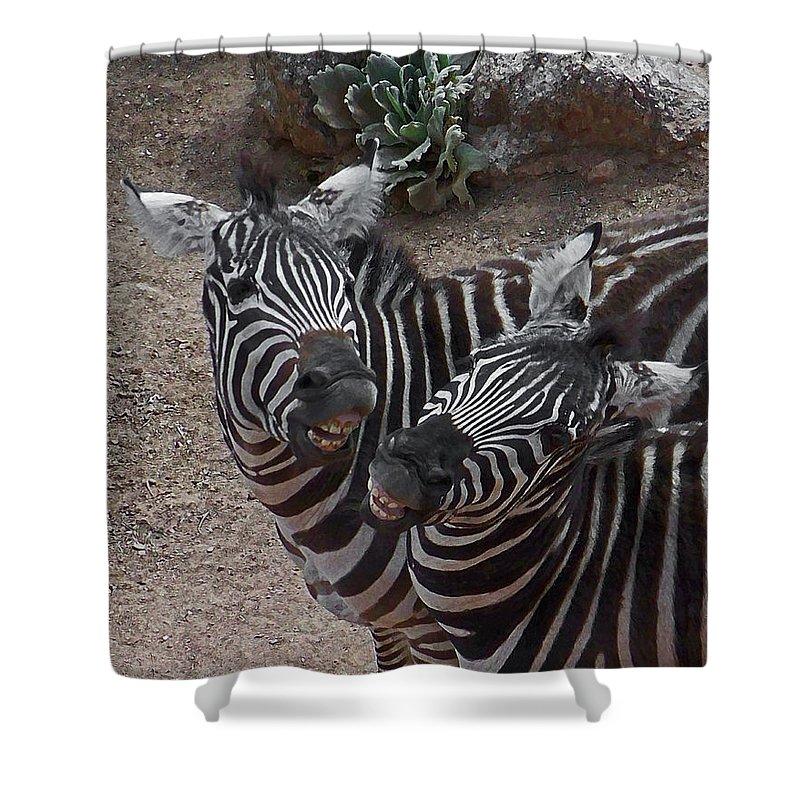 Zebras Shower Curtain featuring the digital art Smiling Zebras by Ernie Echols