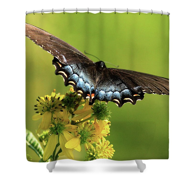 Shower Curtain featuring the photograph Smoky Mountain Color by Douglas Stucky