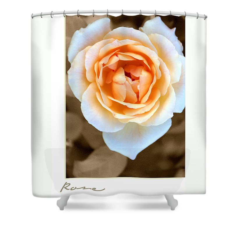 Flower Shower Curtain featuring the photograph Smooth Angel Rose by Holly Kempe