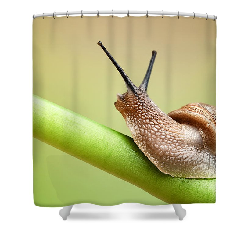 Snail Shower Curtain featuring the photograph Snail On Green Stem by Johan Swanepoel