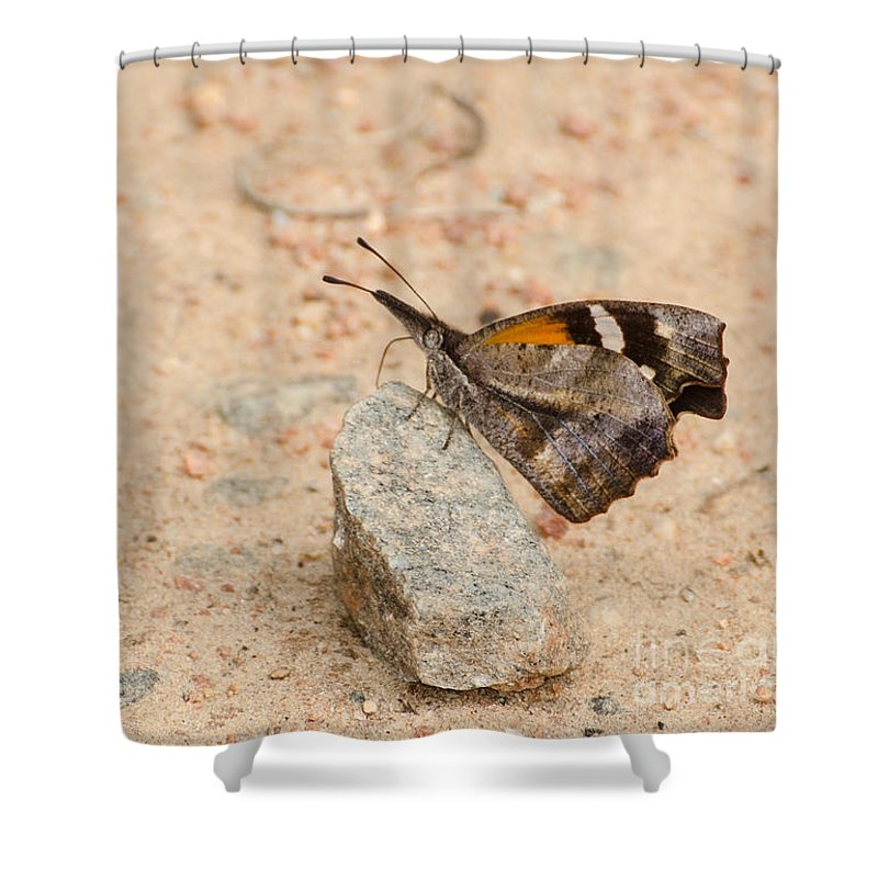 Insect Shower Curtain featuring the photograph Snout Butterfly by Donna Brown