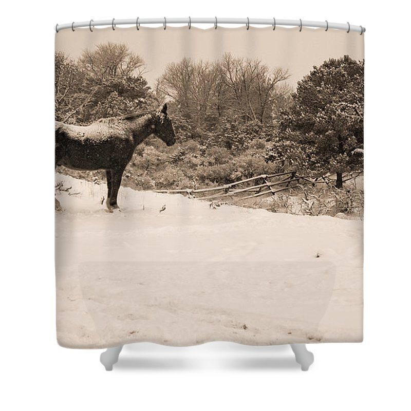 Equidae Equus Caballus Shower Curtain featuring the photograph Snow Bound Horse by J L Woody Wooden