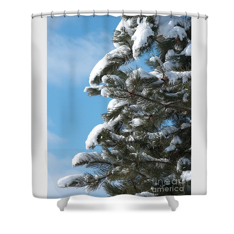 Snow Shower Curtain featuring the photograph Snow-Clad Pine by Ann Horn