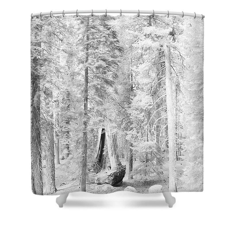 Sequoia Shower Curtain featuring the photograph Snow Impressions by Angela Stanton