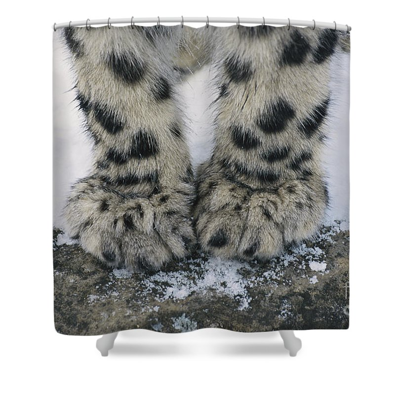 Snow Leopard Shower Curtain Featuring The Photograph Feet By Thomas And Pat Leeson