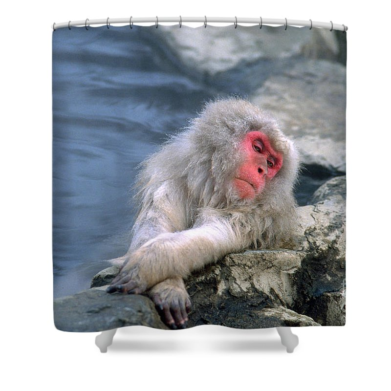 Japanese Macaque Shower Curtain Featuring The Photograph Snow Monkey By Art Wolfe