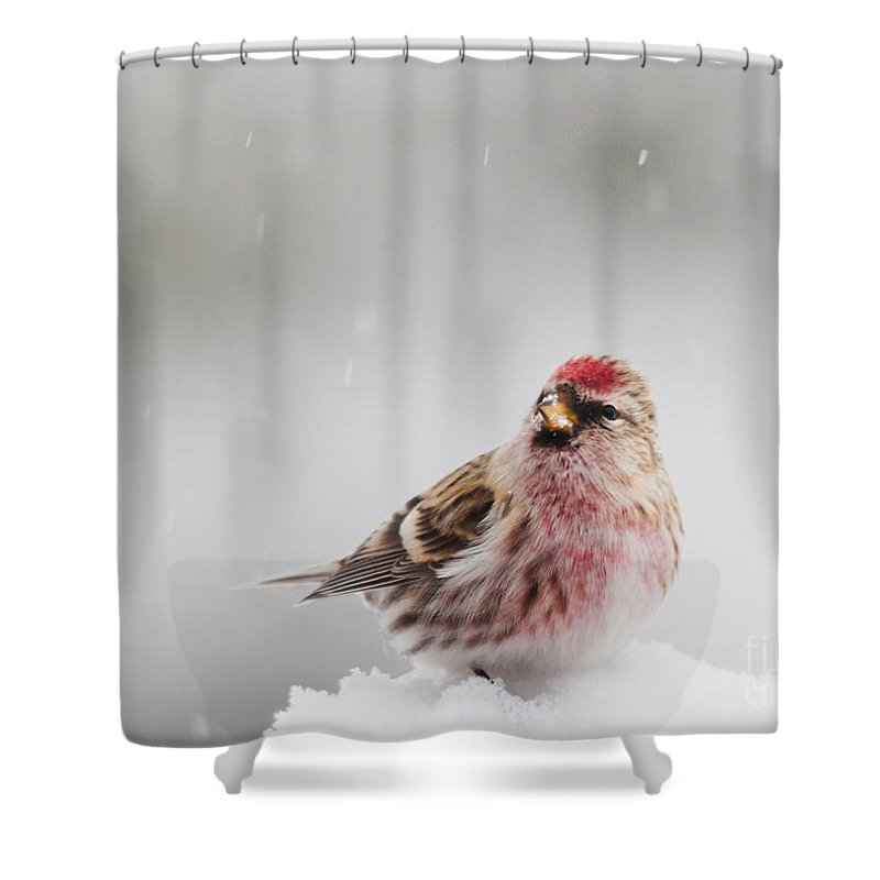 Landscapes Shower Curtain featuring the photograph Snowing by Cheryl Baxter