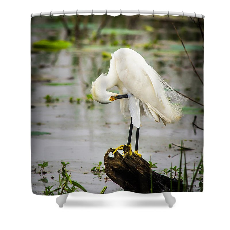 Animal Shower Curtain featuring the photograph Snowy Egret In Swamp by Robert Frederick