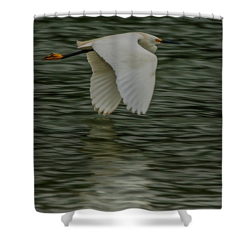 Egretta Thula Shower Curtain featuring the photograph Snowy Egret On Estuary by Jeff Folger