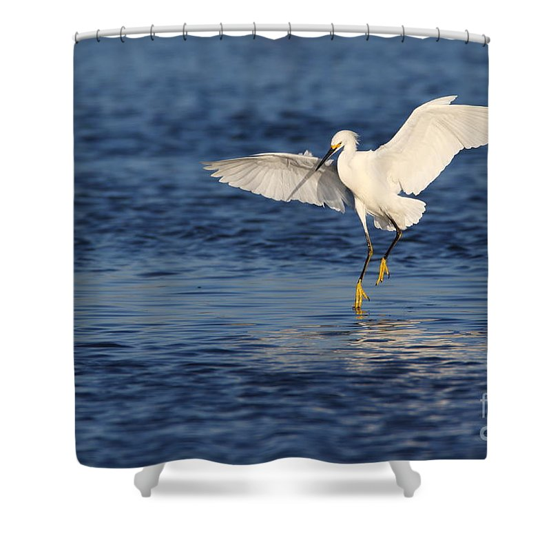 Snowy Egret Shower Curtain featuring the photograph Snowy Landing by Bryan Keil