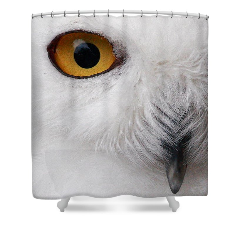 Snowy Owl Shower Curtain featuring the photograph Snowy Owl by Andrew McInnes