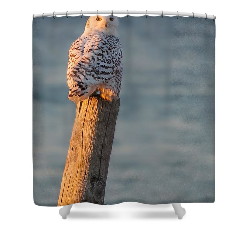 New England Owl Shower Curtain featuring the photograph Snowy Owl At The Seashore by Jeff Folger