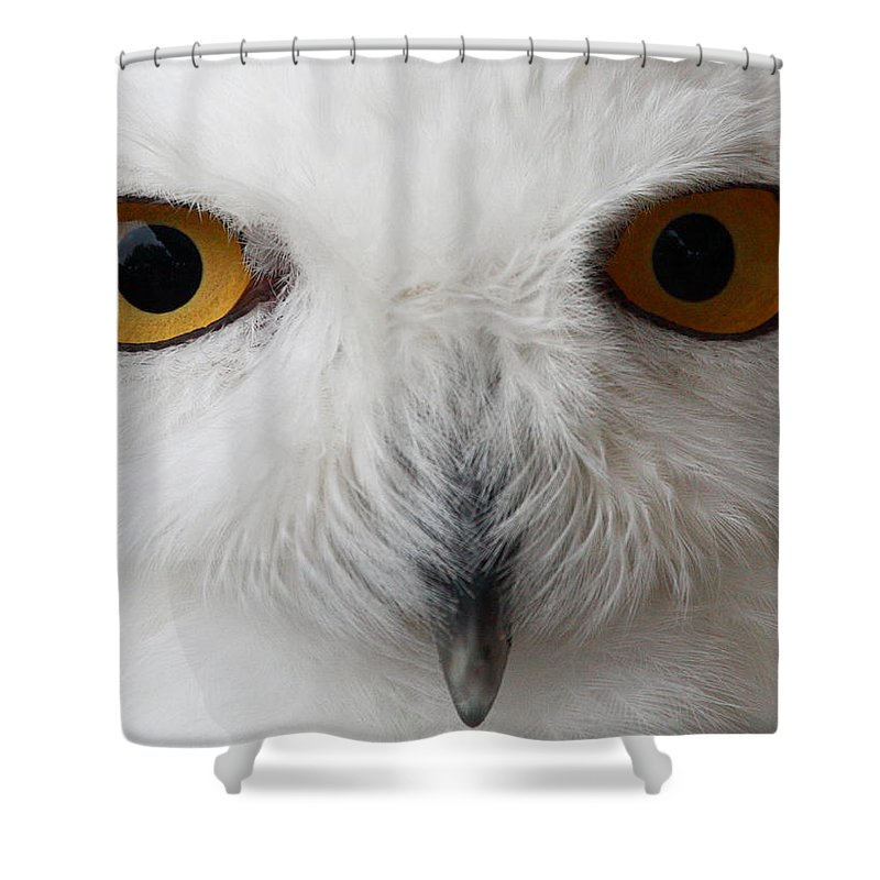 Snowy Owl Shower Curtain featuring the photograph Snowy Owl Stare by Andrew McInnes