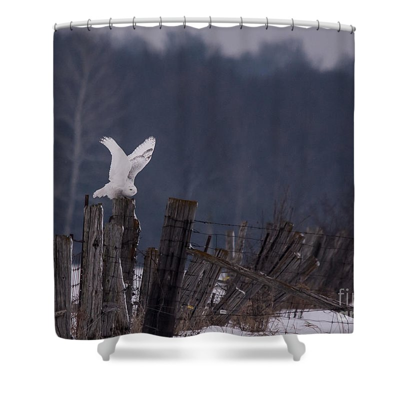 Field Shower Curtain featuring the photograph Snowy Wings Up by Cheryl Baxter