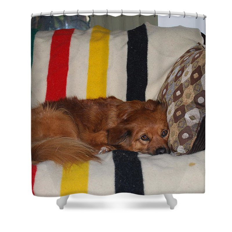 Lady Likes Her Pillow Shower Curtain featuring the photograph Snuggle Time by Robert Floyd